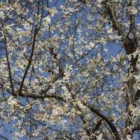春の昼休み