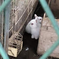 ウサギの赤ちゃんがいました。